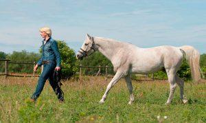 Therapeutisches Reiten in Berlin die Pferdefrau